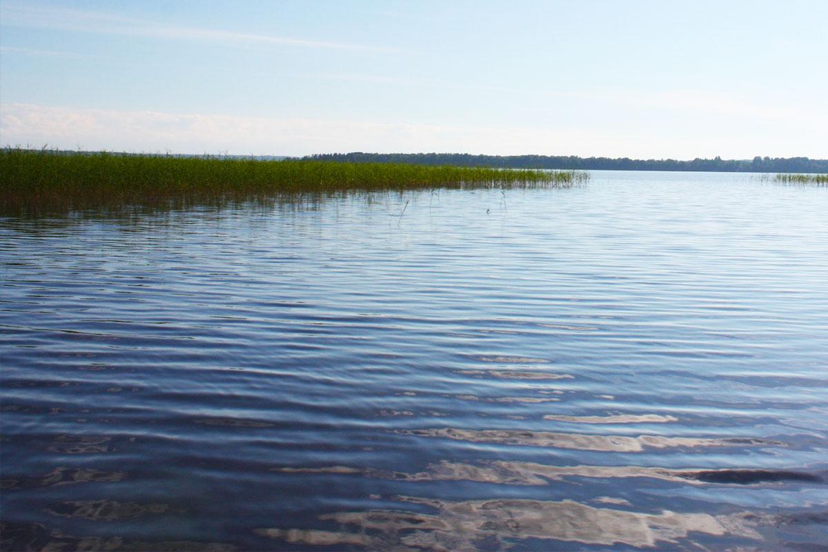 Прогулка к озеру и вдоль берега. Озеро Отрадное. База отдыха Розовая дача
