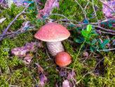Грибы в лесу. База отдыха Розовая дача
