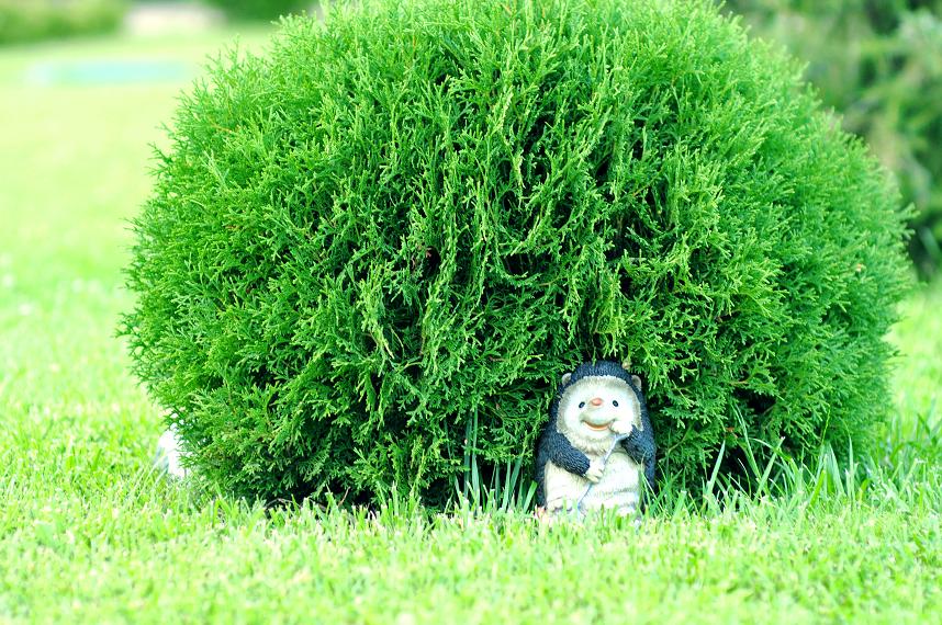 Ежик спрятался под кустом