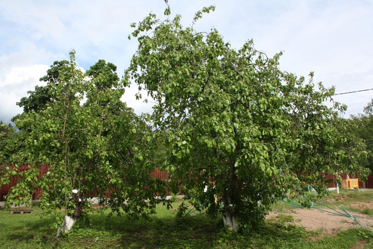 Деревья на территории базы отдыха