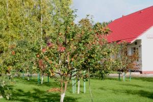 Урожай в яблоневом саду. База отдыха Розовая дача