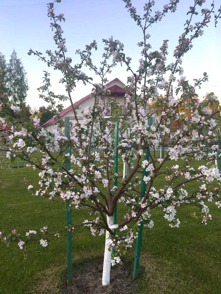 Цветущий сад. База отдыха Розовая дача