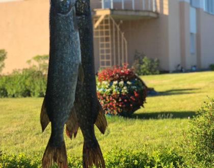 С 15 июня официальное разрешение на рыбную ловлю!