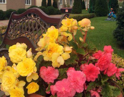 Осенние краски ушедшего лета.