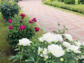 Цветы удивительное создание природы, их красота особая!